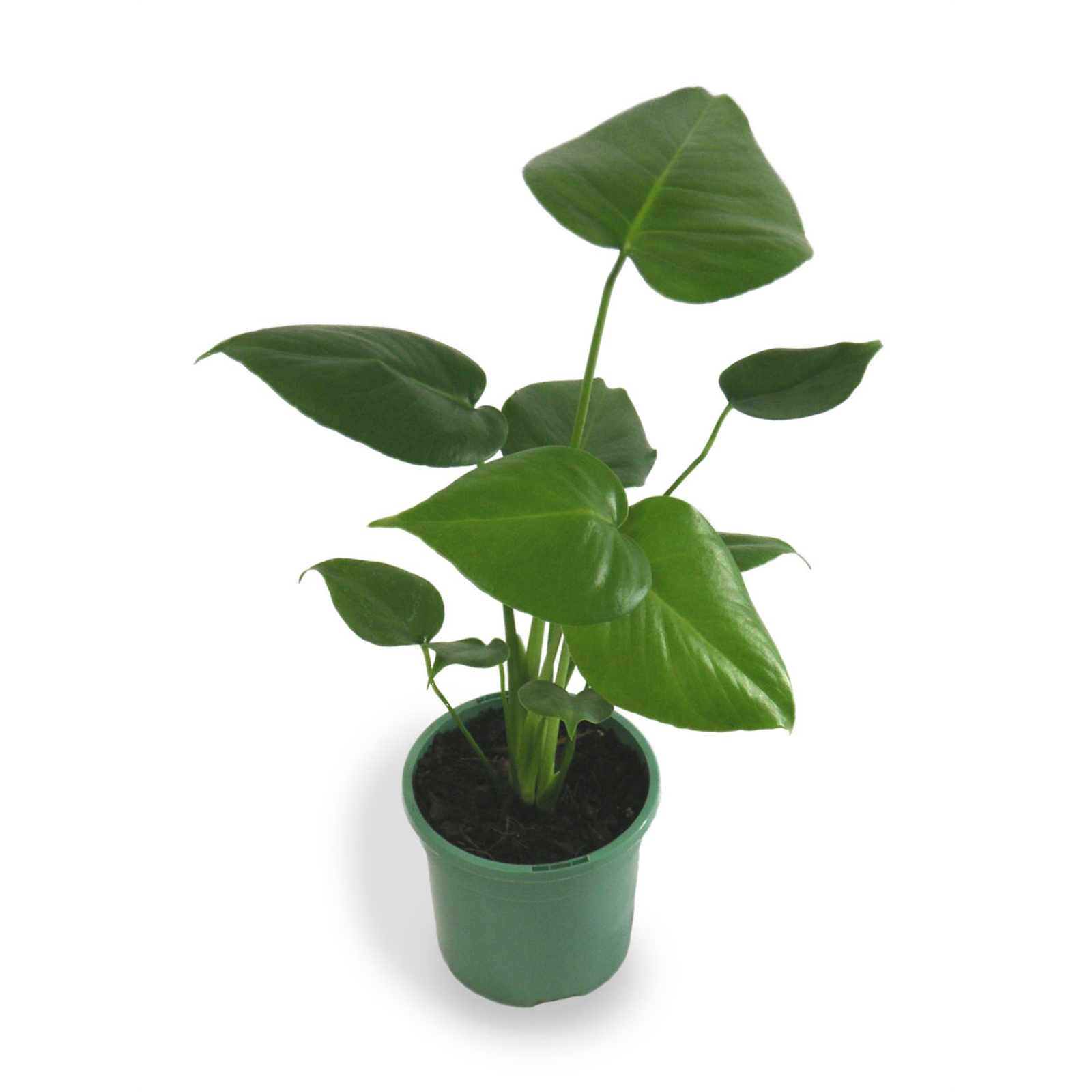 "You can use the spare change to buy a trendy indoor plant t pop in your plant stand, such as the **Fruit Salad Plant** or **Monstera deliciosa** from [Bunnings](https://www.bunnings.com.au/130mm-fruit-salad-plant-monstera-deliciosa_p3610589|target=""_blank""