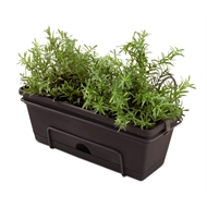Whites Outdoor Garden Up Herb Planter