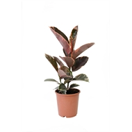 190mm Assorted Indoor Foliage