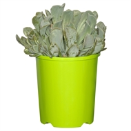 140mm Assorted Succulent 'Bright N Easy Range'