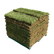 Sir Walter DNA Certified Buffalo 40m² - Soft Leaf Buffalo Turf - Pallet