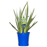 180mm Assorted Low Care Plants 'Mighty Tuff Range'