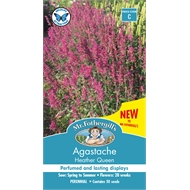 Mr Fothergill's Agastache Heather Queen