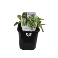 Oregano 95mm Food For Life Range
