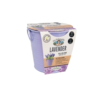 Mr Fothergill's Boutique Gardens Lavender Grow Kit