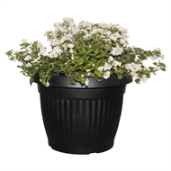 348mm Flowering Combo  White Mix In Black Vesna