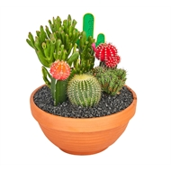 190mm Cactus Garden Terracotta