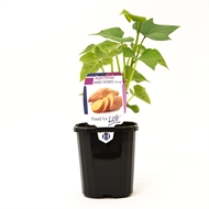 95mm Assorted Plants 'Super Foods For Life Range'