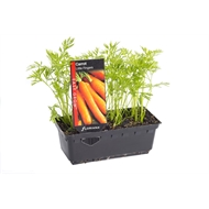 Assorted Vegetables And Herbs - Easy Grow