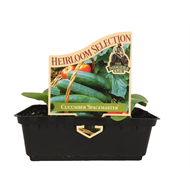 Heirloom Selection Vegetable Seedlings Metric Punnet - Various