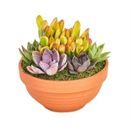 160mm Succulent Garden Terracotta Bowl