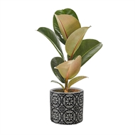 120mm Indoor Foliage In Lace Cement Pot