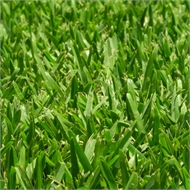 Sir Walter DNA Certified Buffalo 100m² Soft Leaf Buffalo Turf -  Pallet