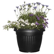 288mm Flowering Combo Blue Mix In Black Vesna