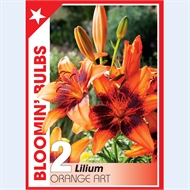 Bloomin' Bulbs Summer Red Bulb - 1 Pack