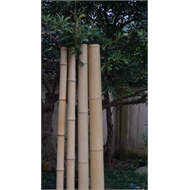 Eden 5cm x 180cm Natural Bamboo Pole
