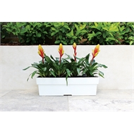 Northcote Pottery 600 x 180mm Slate Neo Self Watering Window Box