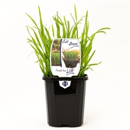 95mm Assorted Herbs 'Food For Life Range'