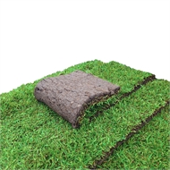 Sir Walter DNA Certified Buffalo 140m² Soft Leaf Buffalo Turf - Pallet