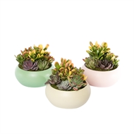 180mm Succulent Garden With Round Ceramic Bowl