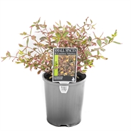 140mm Small Spaces And Container Solutions - Assorted Compact Plants