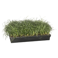 65mm Mondo Grass Tall Tray Of 40 - Ophiopogon Japonicus