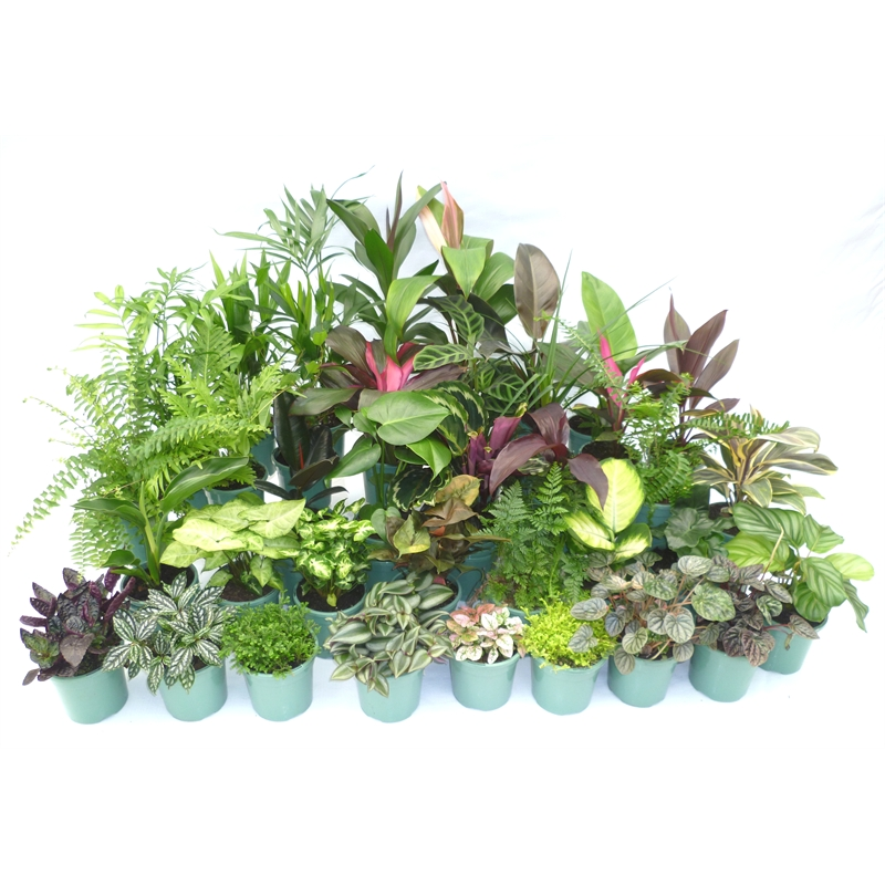 Our range the widest range of tools lighting for Easy care indoor plants