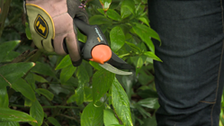 About Fiskars PowerGear Pruners