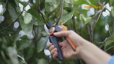 About Fiskars PowerGearX Pruners