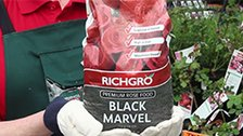 About Richgro Black Marvel Rose Food