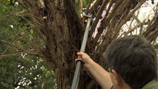 About Fiskars Tree Pruners